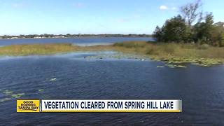 Vegetation cleared from Spring Hill Lake - Video