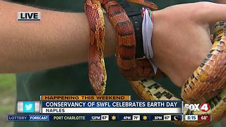 Celebrate Earth Day at the Conservancy of Southwest Florida - 8am live report - Video