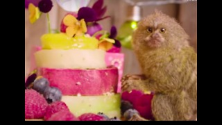Little Baby Monkeys Have Fun Birthday Party - Video
