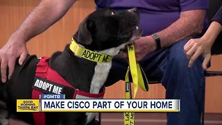 Rescues in Action: Sisco - Video