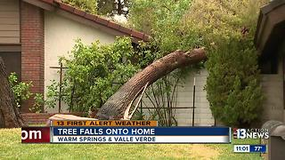 Tree falls on home near Warm Springs, valle Verde - Video