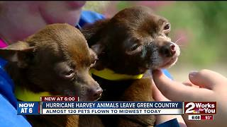 Hurricane Harvey animals leave Green Country - Video