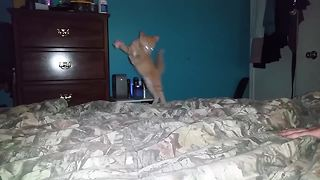 Best Cat Fails of the Week