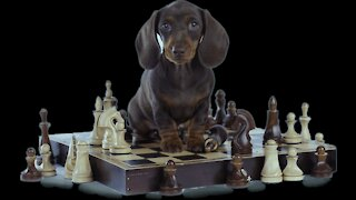The Science behind my dog training system