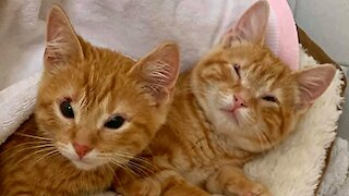 Shelter Holds Virtual Kitten Shower In Era Of Social Distancing