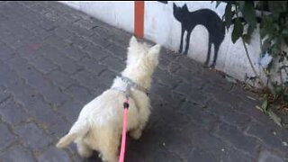 Dog is scared by a picture of a cat on a wall