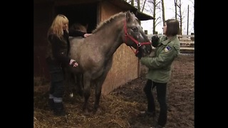 Polish Horse Sanctuary