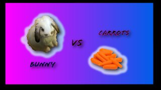Bunny can't stop eating carrots