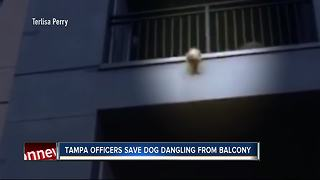Dog rescued after three-story fall from balcony - Video