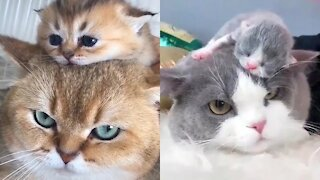 😍 Mother Cat And Kittens 🐱 Funny and Cute Cats Compilation 2020