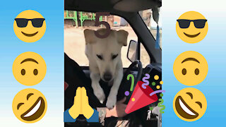 Funny dog and cat, video 5