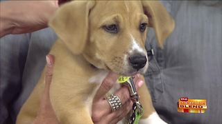 The Importance of Vaccinating Your Pets - Video