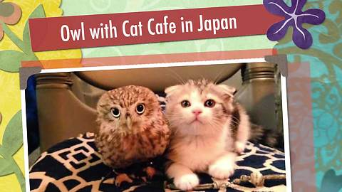 An Owl's Unique Friendship With A Cat Attracts Visitors To This Japanese Cafe