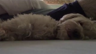 This Dog Takes Her Afternoon Naps Very Seriously - Video