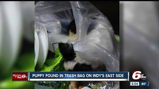 Puppy found in trash bag on Indy's east side - Video