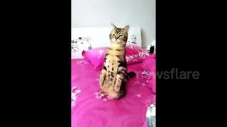 This cat seems to think its a meerkat - Video