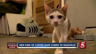 1st Cat Cafe Debuts In Nashville - Video