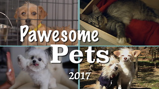 These Pawsome Pet Stories Warmed Our Hearts - Video