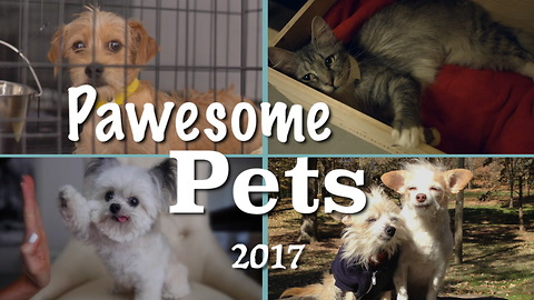 These Pawsome Pet Stories Warmed Our Hearts