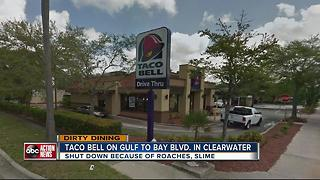 Dirty Dining: Taco Bell temporarily closed for almost 60 live and dead roaches near food - Video