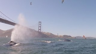 Humpback Whales Spotted in San Francisco - Video