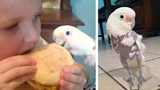 Stuffed parrot – Bird steals child's breakfast - Video