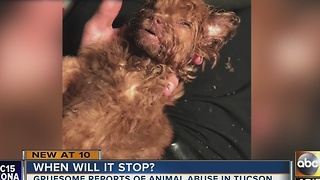 Two animal abuse cases in Tucson that leave us broken hearted - Video