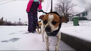 California Dogs First Time in The Snow - Video