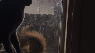 Glass window separates cat and squirrel playtime
