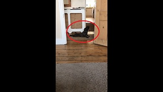 French Bulldog dries off in most hilarious way possible - Video