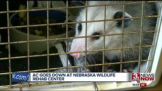 Heat creates emergency for wildlife rehab - Video