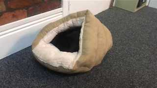 Dachshund Has Interesting Reaction to His New Bed - Video