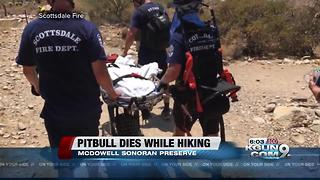 Owner cited for animal cruelty after dog dies while on Scottsdale hike - Video