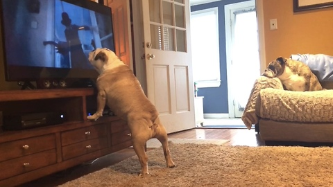 Bulldog gets a big scare during horror scene