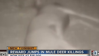 Reward jumps to $18K in mule deer killings near Mount Charleston - Video