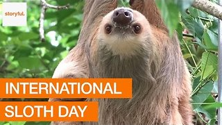 Happy International Sloth Day - Video