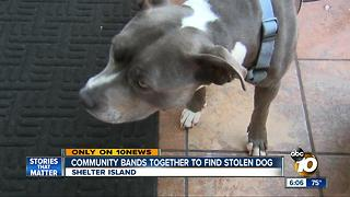 Community bands together to find stolen dog - Video