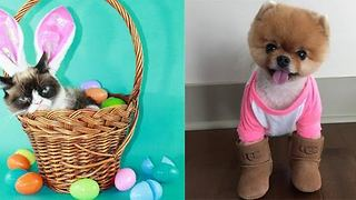 Meet the famous pets of Instagram! - Video