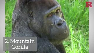 Endangered Animals You Should Know About | Rare Animals - Video