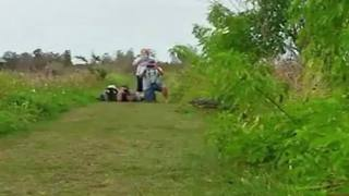 HUGE Gator spotted in Lakeland - Video