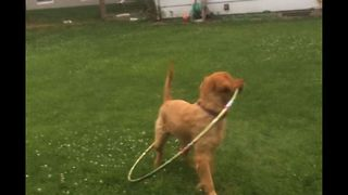 Hula Hoop Takes Dog For A Loop - Video