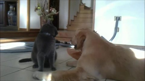 Hilarious animal friendship between age-old rivals