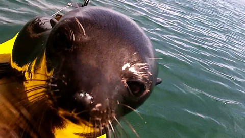 Friendly Seal Jumps On Kayak To Welcome Tourists To The Island