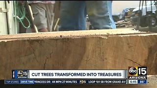 The trees in your yard could have a second life - Video