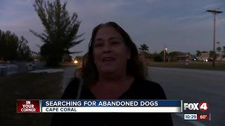 Three Cape Coral Women Search for Abandoned Dog - Video