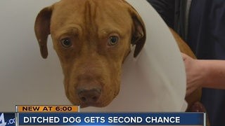 Dog found dumped, ditched gets second chance