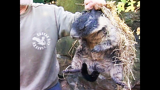 Sleepy Time For Groundhogs - Video