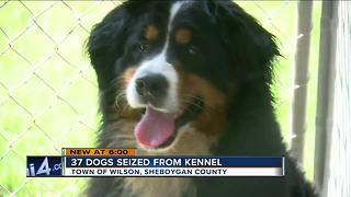 37 dogs seized from kennel in Sheboygan Co. - Video