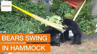 Family of Bears Invade Garden and Play With Hammock - Video