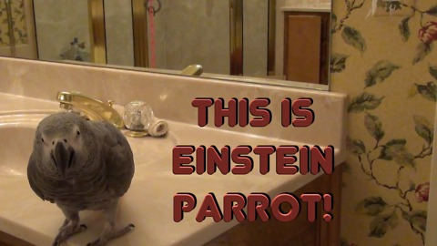 Einstein the Parrot shows off vast array of phrases